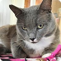 Adopt A Pet :: Flaherty - Salisbury, MA