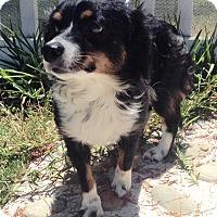 Adopt A Pet :: Junie - Santa Ana, CA