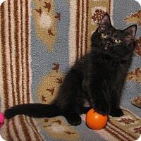 Adopt A Pet :: Sarah Smiles - Gainesville, VA