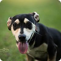 Adopt A Pet :: Heart - Daleville, AL