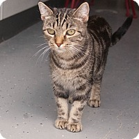 Adopt A Pet :: Suzy Q - Martinsville, IN