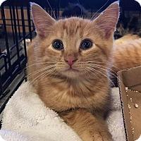 Adopt A Pet :: Joffrey - Atlanta, GA