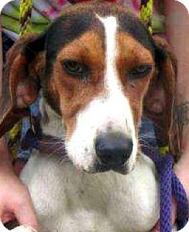 Hound (Unknown Type) Mix Dog for adoption in Shelter Island, New York - ella