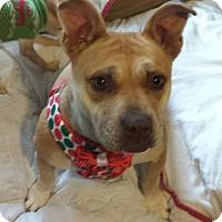 Adopt A Pet :: Ora - Akron, OH