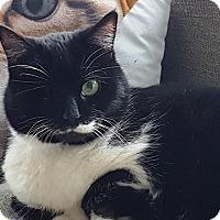 Adopt A Pet :: Amanda - Vancouver, BC