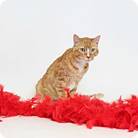 Adopt A Pet :: Ginger Snap  (Foster Care) - Baton Rouge, LA
