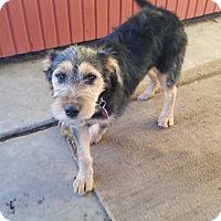 Adopt A Pet :: Boomer - San Diego, CA