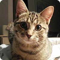 Adopt A Pet :: Kara - Montreal, QC