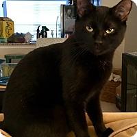 Adopt A Pet :: Anna - Youngsville, NC