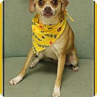 Adopt A Pet :: Lara - Hillsboro, TX