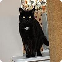 Adopt A Pet :: Thelma - El Dorado Hills, CA