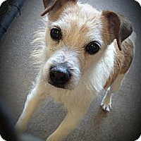 Adopt A Pet :: Gumby in San Antonio - San Antonio, TX