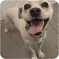 Adopt A Pet :: Bianca - Phoenix, AZ