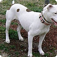 Adopt A Pet :: Reba - Ridgely, MD