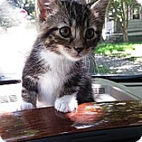 Adopt A Pet :: Michael - Cleveland, OH