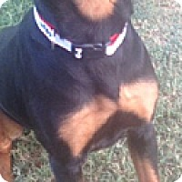 Adopt A Pet :: Reba - McAllen, TX