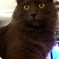 Adopt A Pet :: Tinsel - Winchester, CA