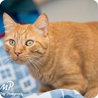 Adopt A Pet :: Elliot - Fountain Hills, AZ