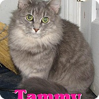 Adopt A Pet :: #3758 Tammy - Lawrenceburg, KY