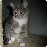 Adopt A Pet :: Arlana - Milwaukee, WI