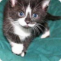 Adopt A Pet :: Spring - Hamilton, ON