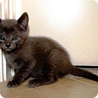 Adopt A Pet :: Abigail - Nolensville, TN