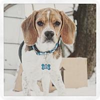 Adopt A Pet :: Dupree - Adoption Pending - West Allis, WI