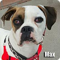 Adopt A Pet :: Max - Encino, CA