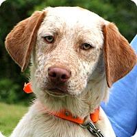 Adopt A Pet :: Atticus - Glastonbury, CT