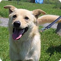 Adopt A Pet :: Faulkner - Elyria, OH