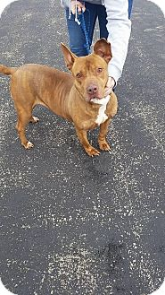 Pit Bull Terrier Mix Dog for adoption in Mount Sterling, Kentucky - Hope