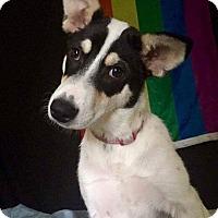 Adopt A Pet :: CeCe - Spring, TX