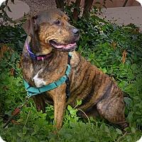 Adopt A Pet :: Hersey - Sedona, AZ