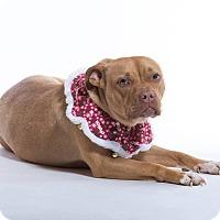 Adopt A Pet :: Ayah - Homer, NY