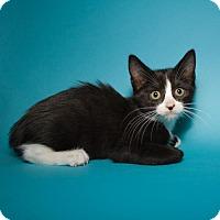 Adopt A Pet :: Larry - Jersey City, NJ