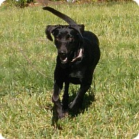 Adopt A Pet :: Ellie in New England! - Ascutney, VT