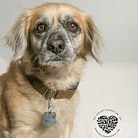 Adopt A Pet :: Bud - Inglewood, CA