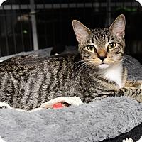 Adopt A Pet :: Higgins - Tomball, TX