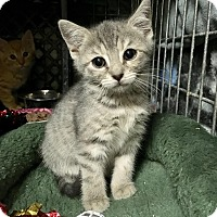 Adopt A Pet :: Dasher - East Brunswick, NJ