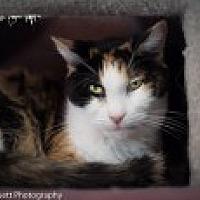 Adopt A Pet :: Jessie - Marietta, GA