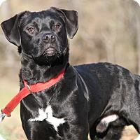 Adopt A Pet :: Donovan - Marietta, OH