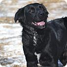 Adopt A Pet :: Jäger