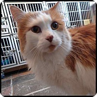 Adopt A Pet :: Sonny - Colorado Springs, CO