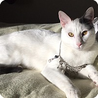 Adopt A Pet :: Spot - Garland, TX