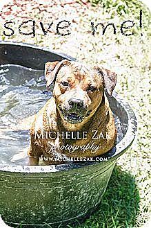 German Shepherd Dog/Terrier (Unknown Type, Medium) Mix Dog for adoption in Miami, Florida - Omarita