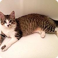 Adopt A Pet :: Chelsy - Houston, TX