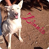 Adopt A Pet :: Zinnia - Orange Cove, CA