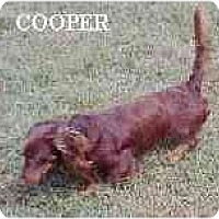 Adopt A Pet :: Cooper - Georgetown, KY