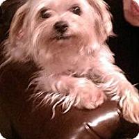 Adopt A Pet :: Rocky - Freeport, NY