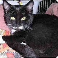 Adopt A Pet :: Domino - Pascoag, RI